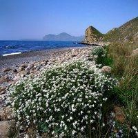 весенний берег наполнен цветами :: viton