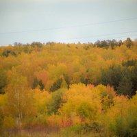 Осень. :: Вадим Басов
