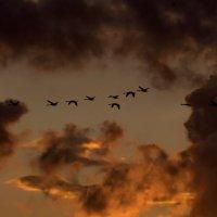 стая лебедей :: Viktor Makarov