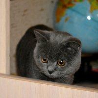Ученый кот.. :: Дмитрий Петренко
