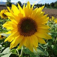 Сентябрьское солнышко!... :: Galina Dzubina