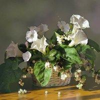 Корзинка с белыми цветами. :: alfina