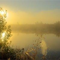 Утро :: Nikita Volkov