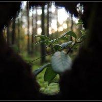 окно в лесу :: sv.kaschuk