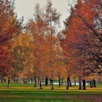 Багрянца милого очарование... :: Sergey Gordoff