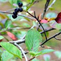 Осення природа-4 :: Михаил Новиков