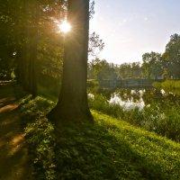 солнечный день сентября :: Елена