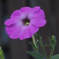 Цветы в саду :: Игорь Касьяненко