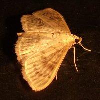 Ночное насекомое :: Тамара Лисицына