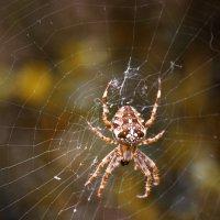 Pora na pająki :: Janusz Wrzesień