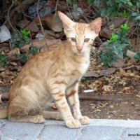 Котёнок :: Валерьян Запорожченко