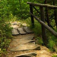 Дорожка в лесу :: Марина Кириллова