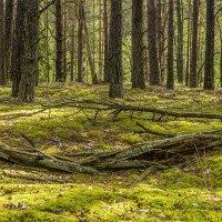 Прогулка в лес :: Игорь Сикорский