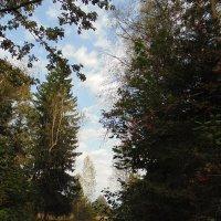 Осень в лесу. :: Людмила Ларина