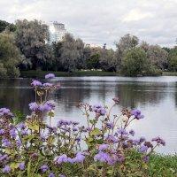цветы уходящего лета :: VL