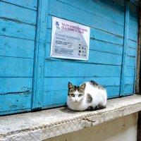 Кошка :: Arman S