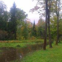 Осень :: Сапсан