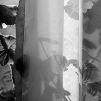 За  тонкой занавесью окна. :: Валерия  Полещикова