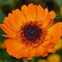 последнии цветы :: Николай Мальцев