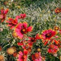 Цветы аномального лета Фото№1 :: Владимир Бровко