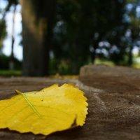 Осень :: Роман Никитин