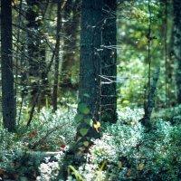 Сказочный лес! :: Паша