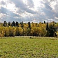 Лес, точно терем расписной,веселой, пестрою стеной стоит над светлою поляной. :: Aquarius - Сергей