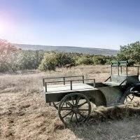 Парк на Федюхиных высотах, Севастополь :: Максимилиан Штейн-Цвергбаум