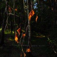 Говорят, завтра начинается Золотая осень :: Андрей Лукьянов