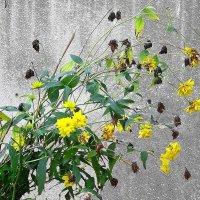 Одни цветы угасают :: Маргарита Батырева
