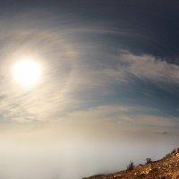 солнце с нимбом вышло из тумана :: viton