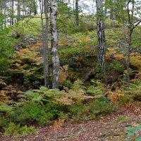 В осеннем лесу :: Swetlana V