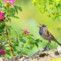 Цветы и птицы :: Влад