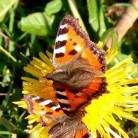 Сентябрьские бабочки :: Ольга