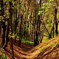 Сентябрьский лес :: Оксана Полякова