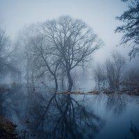 Туман :: Виталий Федотов