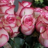 розы :: Игорь Смолин