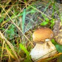Mushroom in silver :: Евгений Балакин