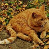 Рыжий цвет стал в моде  или осень наступила .... :: Святец Вячеслав