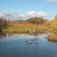 Осень на пруду :: Наталья Воронцова