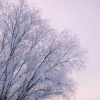 Январь :: Александр Мирошниченко