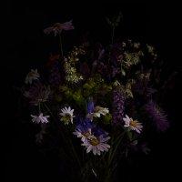 Полевые цветы :: Виктория Балаян