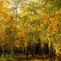 Дорога в осень. :: nadyasilyuk Вознюк