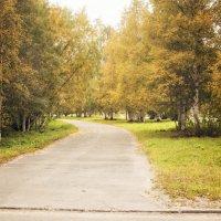 Осенняя дорога :: Наталья Копылова