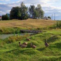 Сельский пейзаж :: Ната Волга