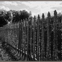 Забор, покрытый мхом :: Михаил Малец
