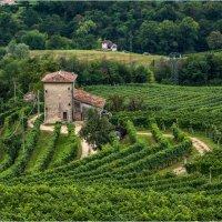 Здесь делают вино... :: Виктор Льготин
