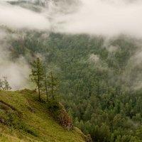 Туман после дождя :: Сергей Герасимов