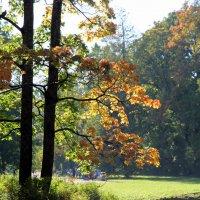Старинные парки хранят свои тайны :: Ирина Фирсова
