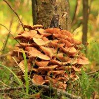 Лесной букетик :: Татьяна Ломтева